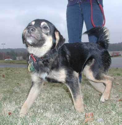 Medium Mixed Breed Dogs A medium sized companion,