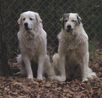 Ella (left) and her sister