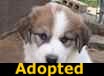 ASD Mix Pups - ADOPTED