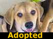 Buttercup - ADOPTED