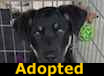 Ricky - ADOPTED